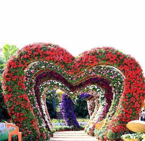 Nashik Flower Park - Heart