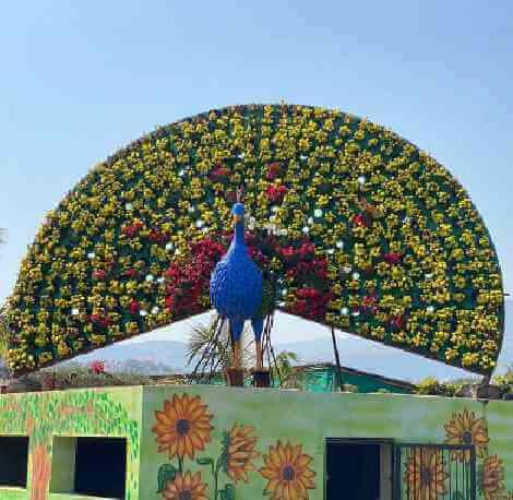 Nashik Flower Park - Peacock